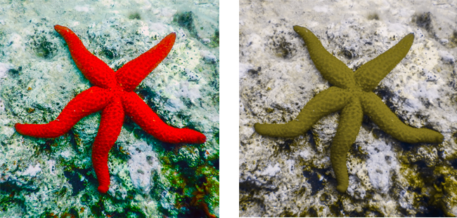 Starfish colourblindness